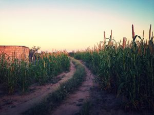 The path through the Mahangu leading to my family's home