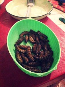 Yum! The nutty crunch of catepillars