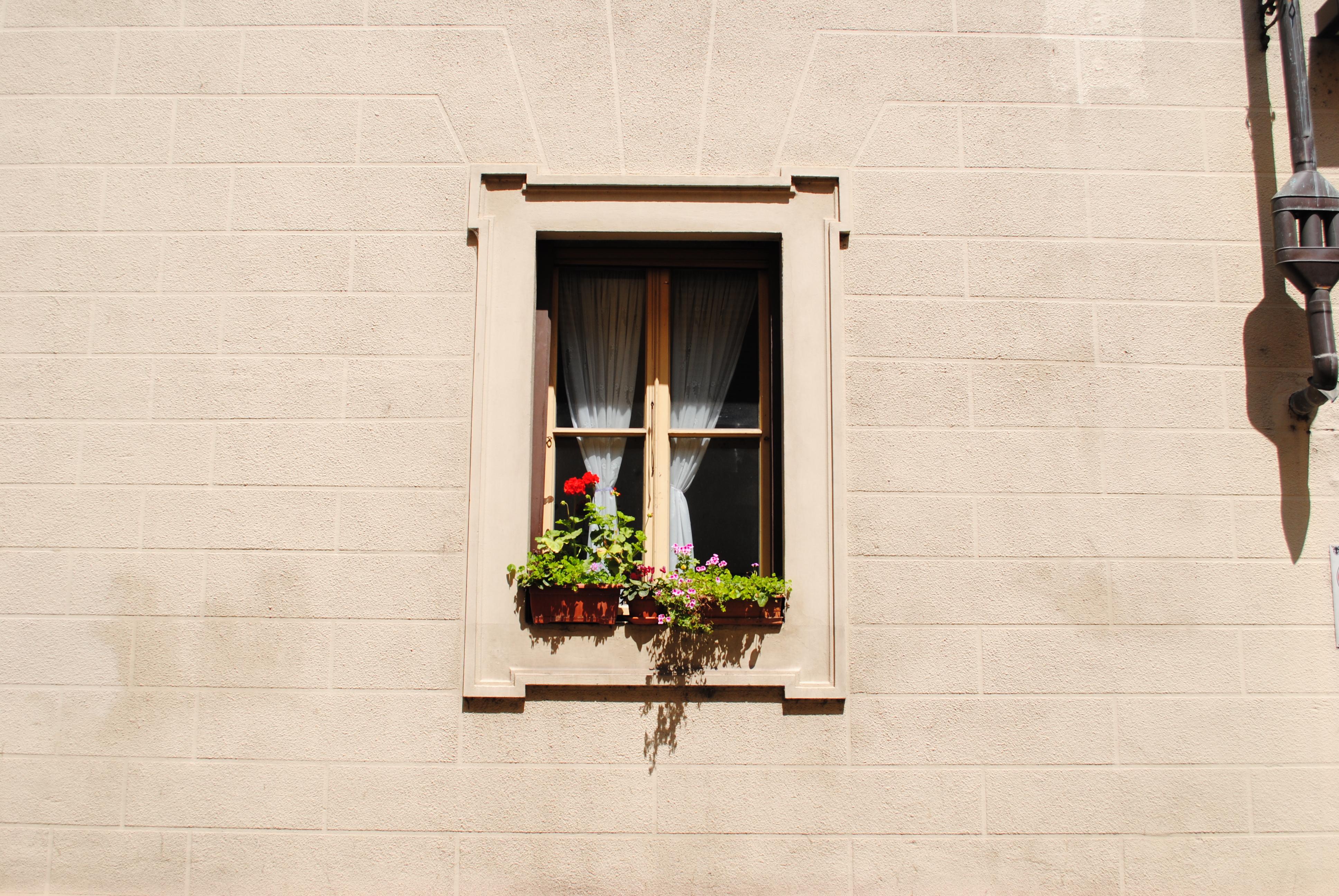 Marianna - window plants