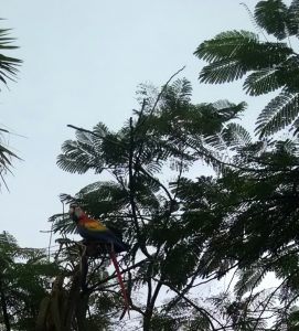 macaw-picture-caylyn-blog-6